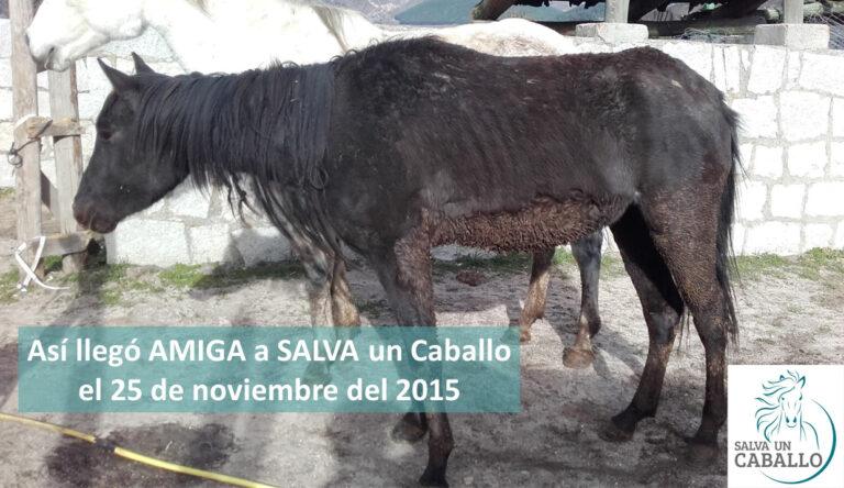 Amiga Año 2015